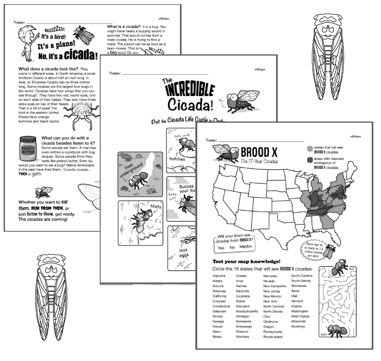Free Workbooks for Learning about Cicadas